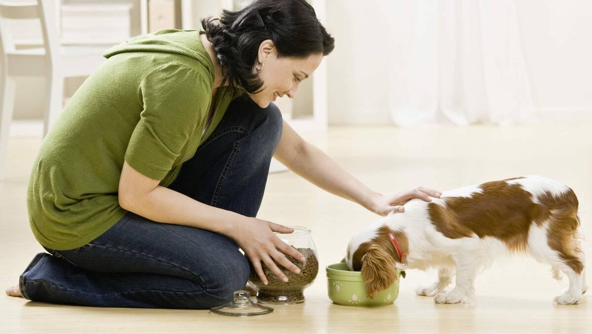Лучший друг человека: как правильно заботиться о собаках