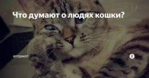 О чем думают кошки? о чем думают коты способны ли кошки мыслить