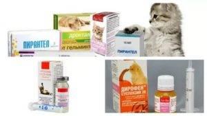 Понос у кота чем лечить препараты