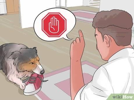 Как наказывать собаку за непослушание - правильные методы наказания   petguru