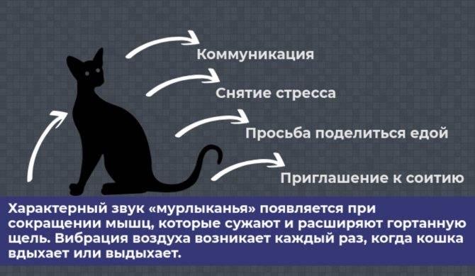 Кошка блюет шерстью каждый день: что делать