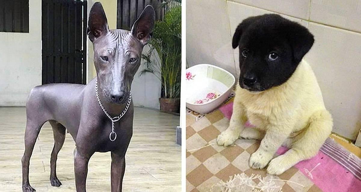 Эти такие разные метисы собак