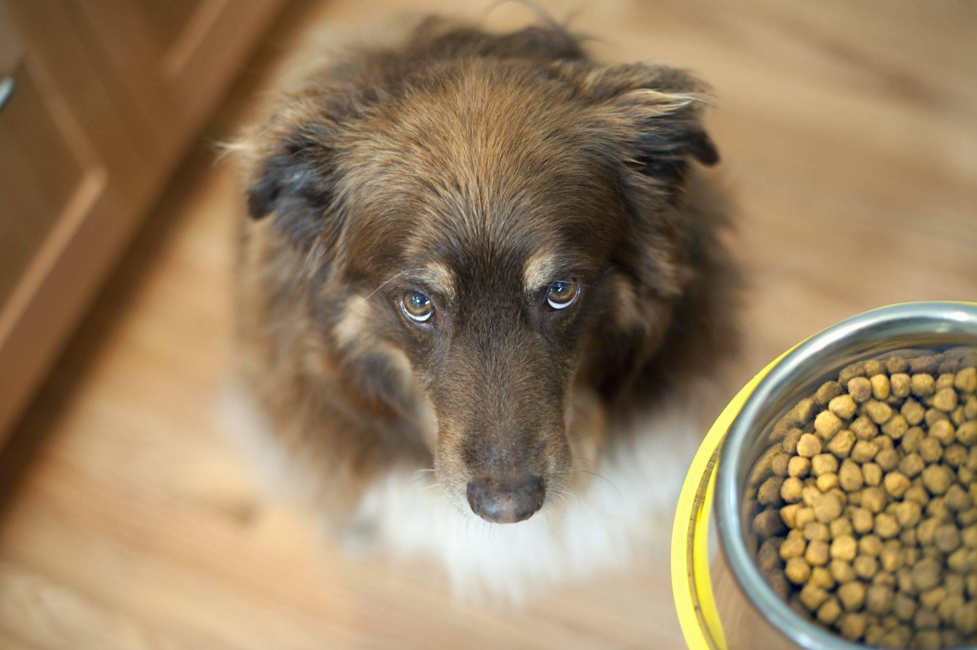 Можно ли есть собачий корм людям?