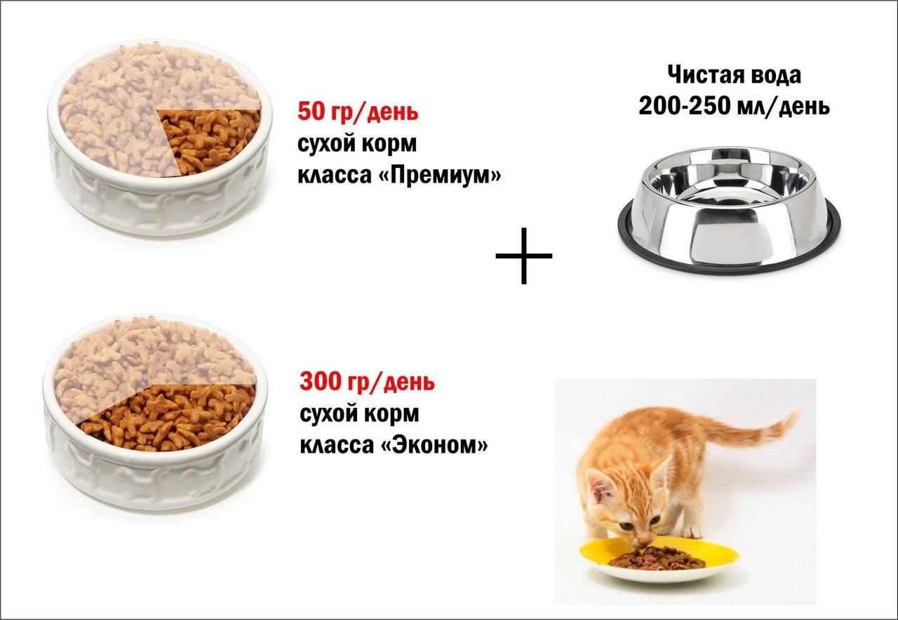 Норма сухого корма для собак в день: таблица кормления, дозировка