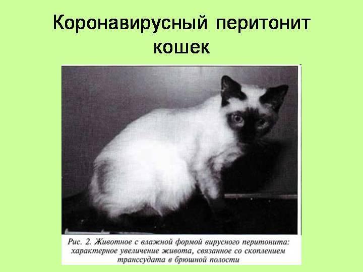 Вирусные инфекции кошек и собак - лечение и диагностика