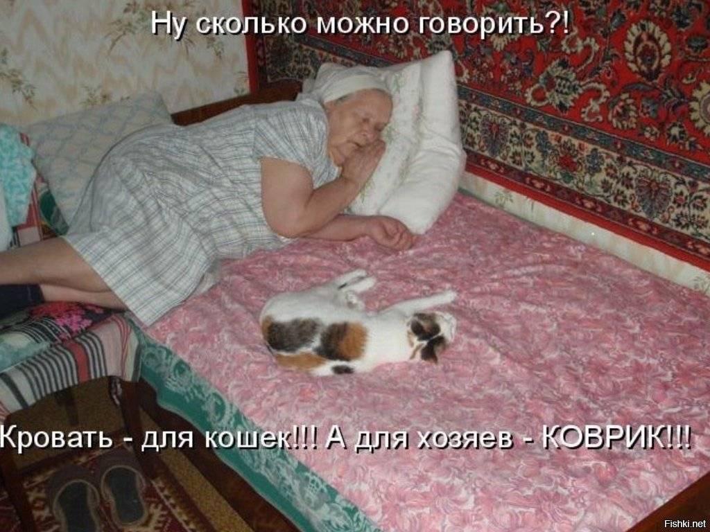 Почему кошка гадит на постель: устраняем причины