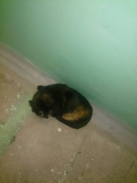 Кот выпал из окна? - советы специалистов что делать