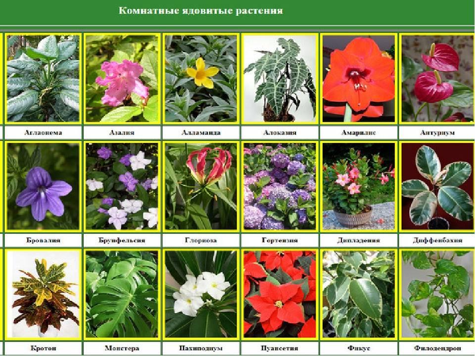 Ядовитые растения для кошек: полный список