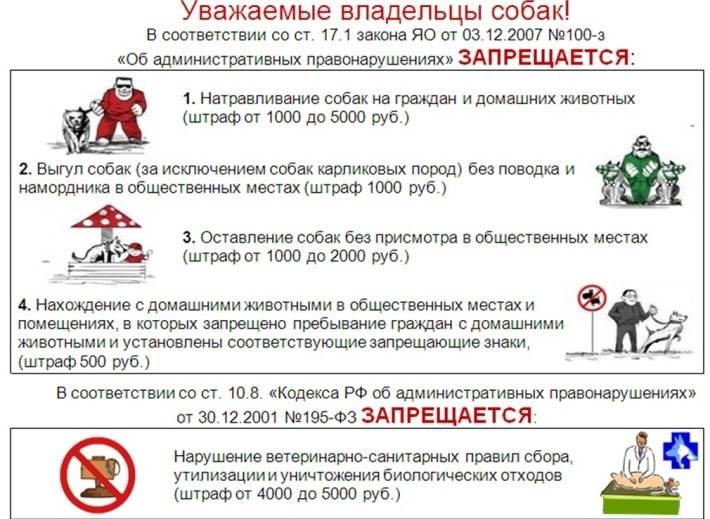 Закон о выгуле собак: правила содержания животных