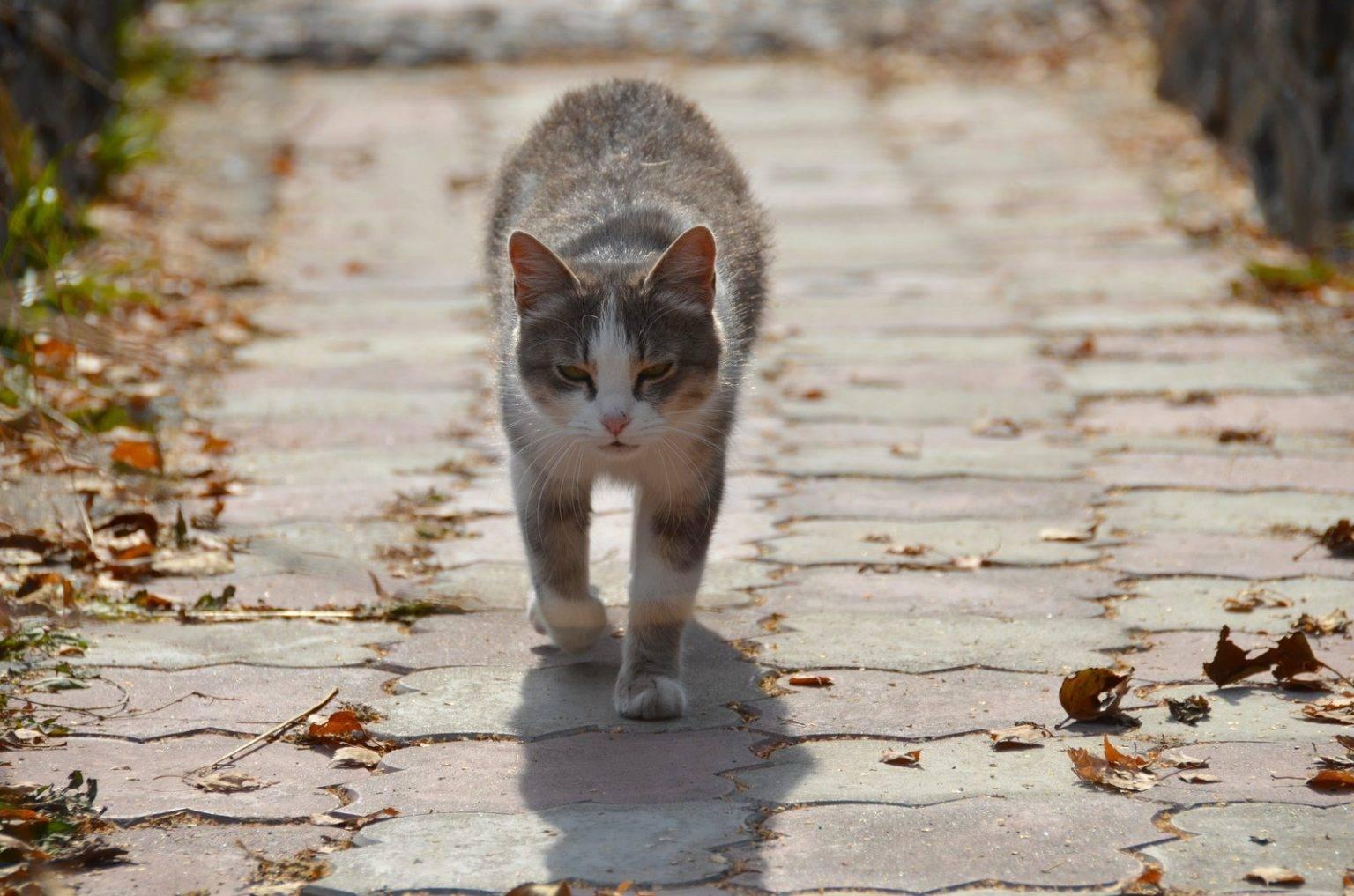 Помнит ли кошка того, кто её обидел и как долго кошки помнят обиду?