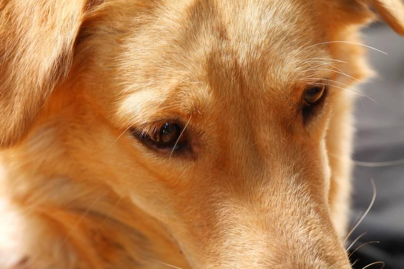 Почему собака скулит - без причины, ночью, скулеж щенка, как отучить | petguru