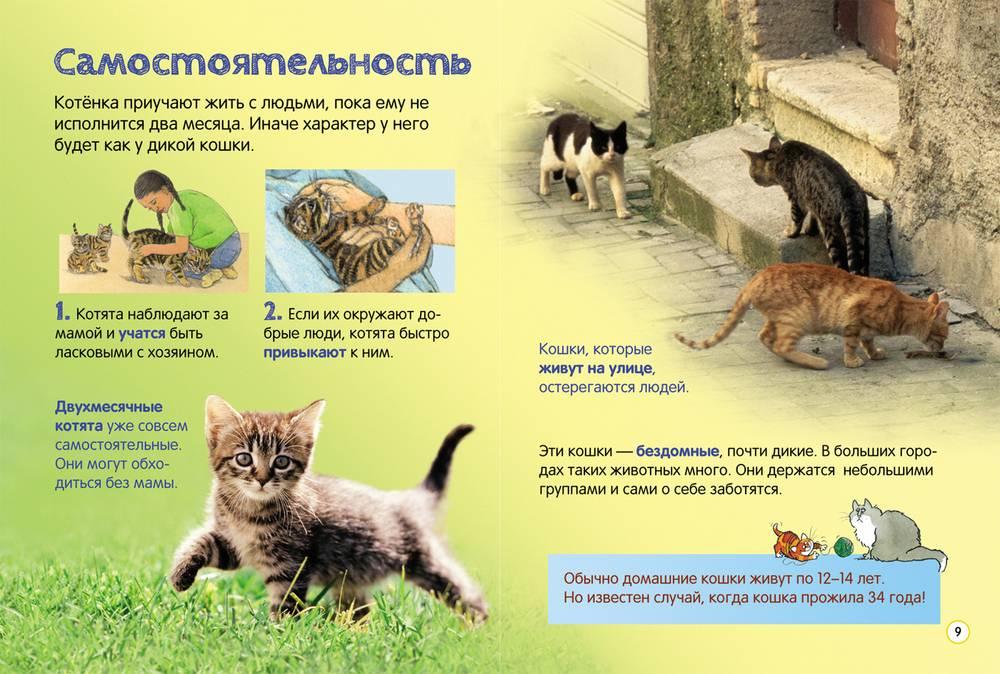 100 интересных фактов о кошках, котах, их жизни и поведении