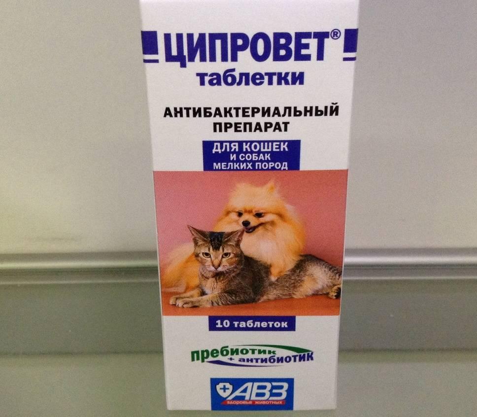 Какое обезболивающее дать кошке при переломе