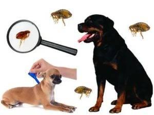 Как дать собаке таблетку от глистов: простые и действенные способы