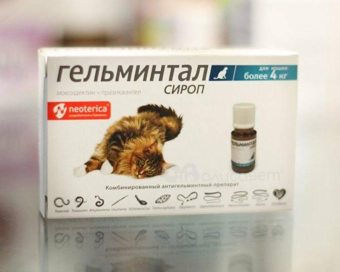 Дегельминтизация собаки перед прививкой: зачем нужна и как проводить?