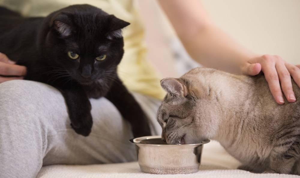 Каким кормом кормить кошку