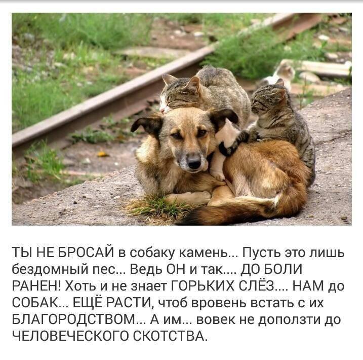 Топ-6 пород собак, которые не заступятся за своего хозяина - gafki.ru