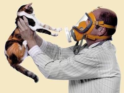 Гипоаллергенные породы кошек: топ пород, которые безопасны для аллергиков
