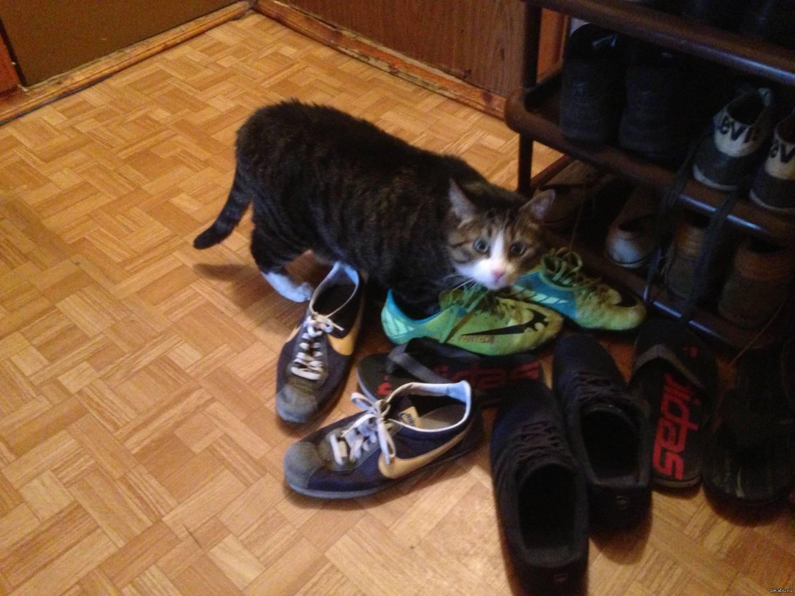 А можно научить кота приносить тапочки? — спрашивалка
