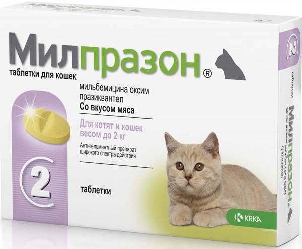Милпразон для собак: инструкция и показания к применению, отзывы, цена