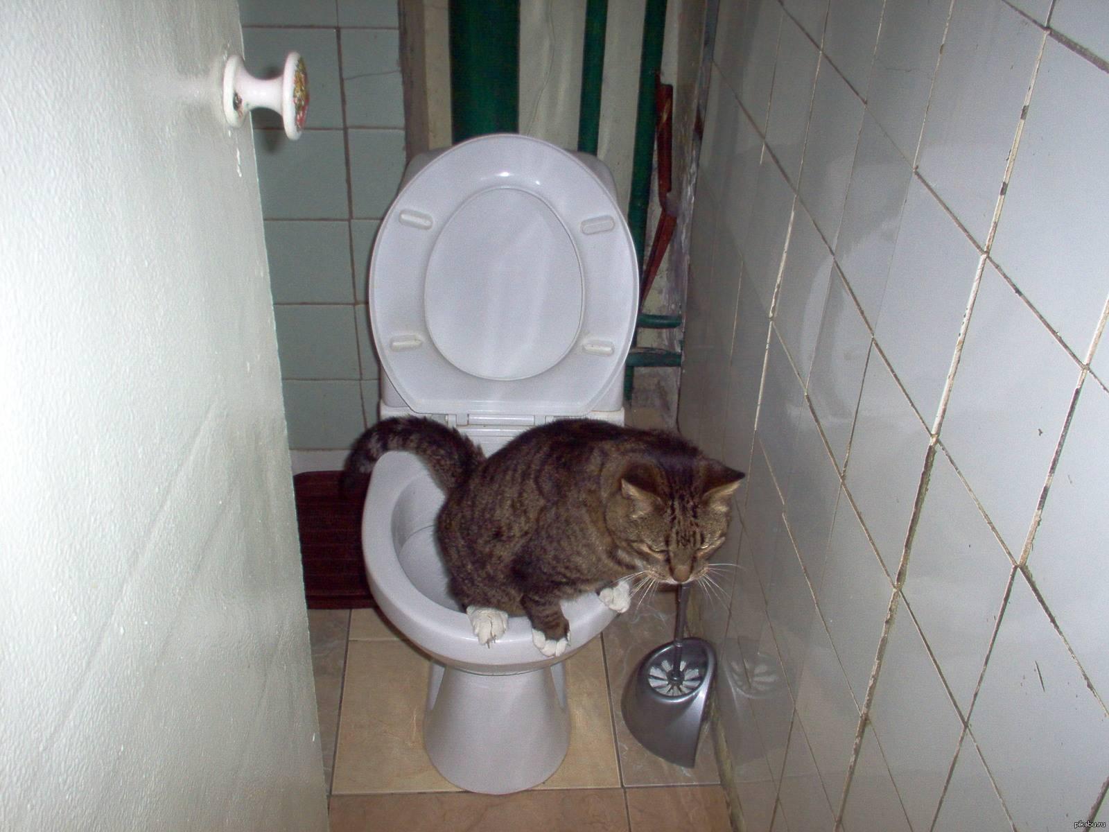 Кот не может сходить в туалет: ? что делать, как помочь в домашних условиях
