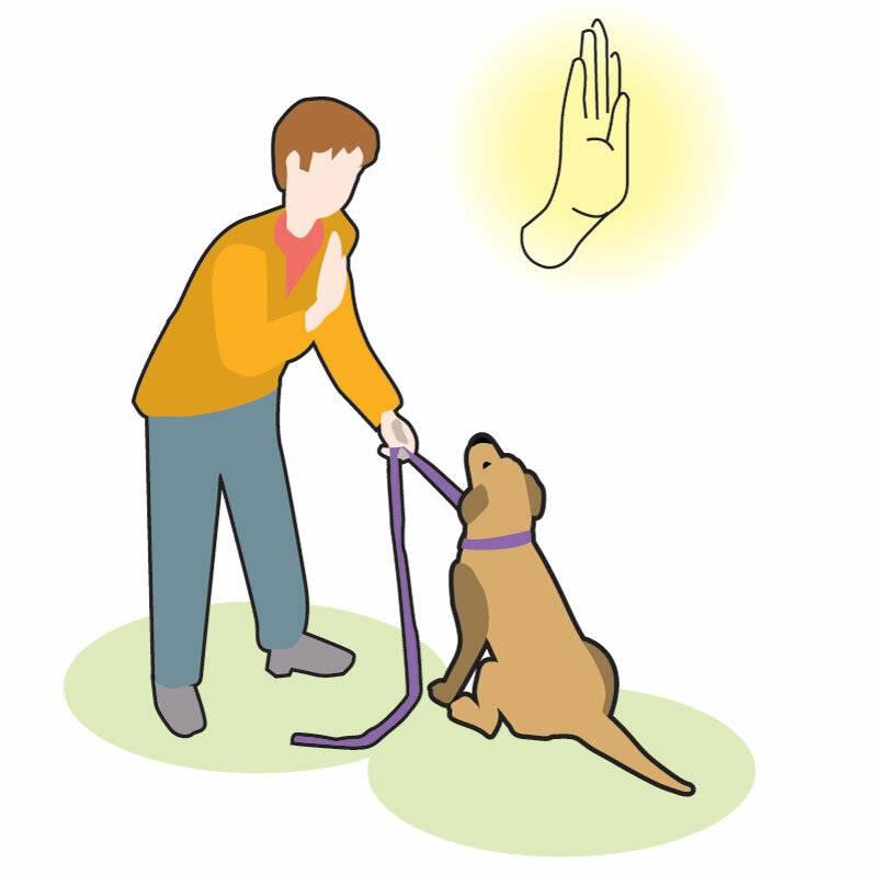 Стоит ли заводить вторую собаку? советы опытного кинолога!
