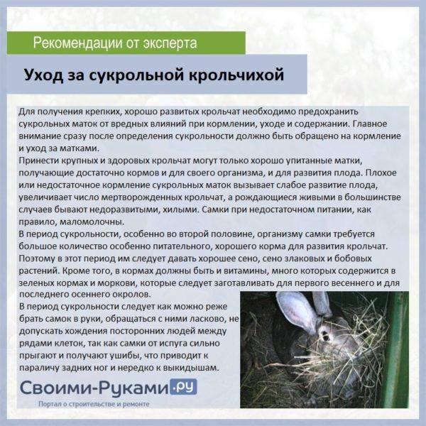 Как узнать что крольчиха беременна и чем ее кормить