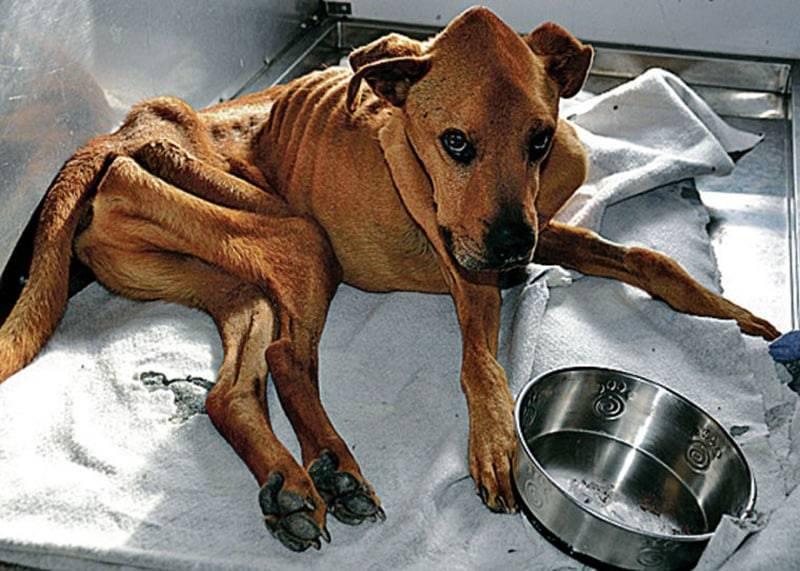 Через сколько времени собака оправится от потери щенков?