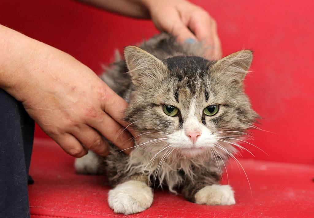 Породистые или не породистые кошки лучше для дома?