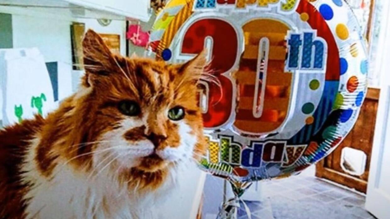 Какие кошки являются долгожителями?