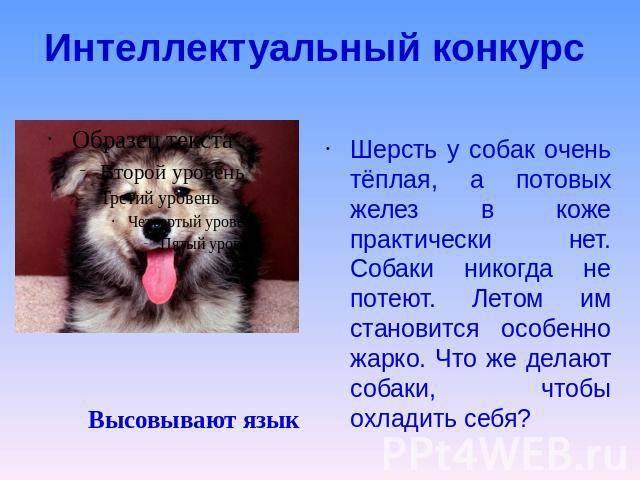 Потеют ли кошки: разбираемся в особенностях физиологии вашего питомца