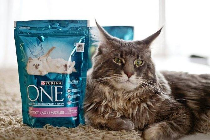 Корм для кошек «гоу» (go natural holistic): отзывы ветеринаров и владельцев животных о нем, его состав и виды, плюсы и минусы