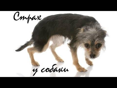 Собака или щенок боятся гулять на улице: что делать хозяину?