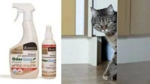 17 лучших методов, как в квартире избавиться от запаха кошачьей мочи