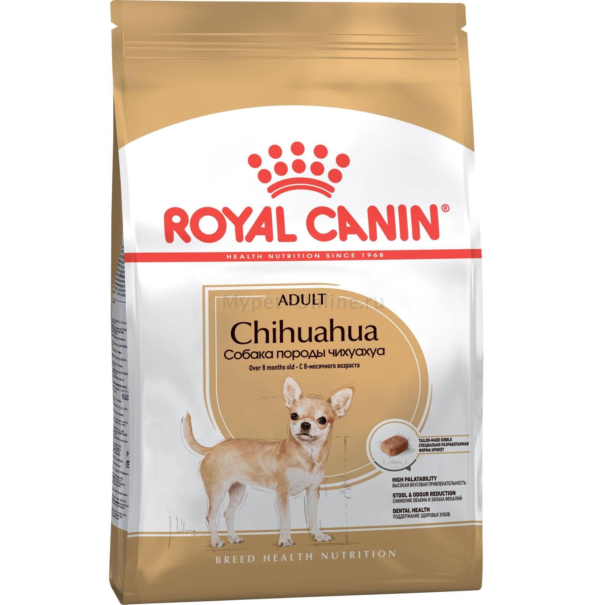 Чем кормить чихуахуа в домашних условиях: правильный рацион питания