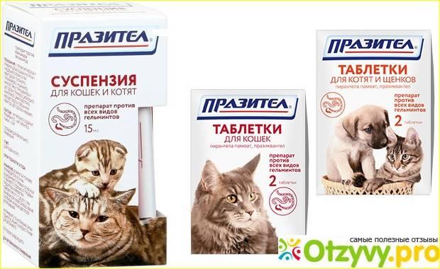Инструкция к препарату празител для кошек и котят