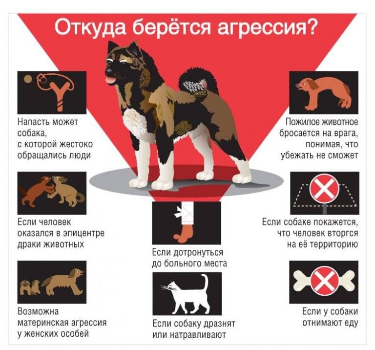 Как защититься при нападении собак