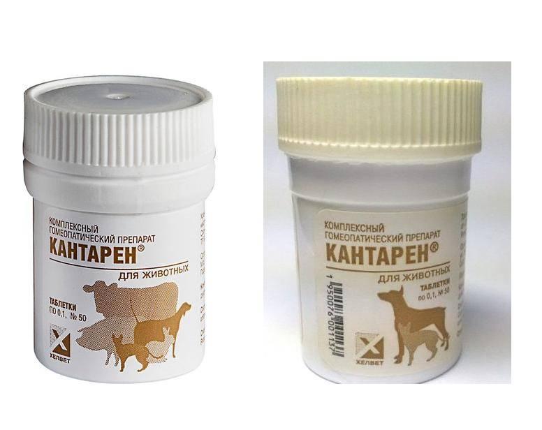 Лекарство для кошек — кантарен, инструкция по применению, действие препарата и его достоинства