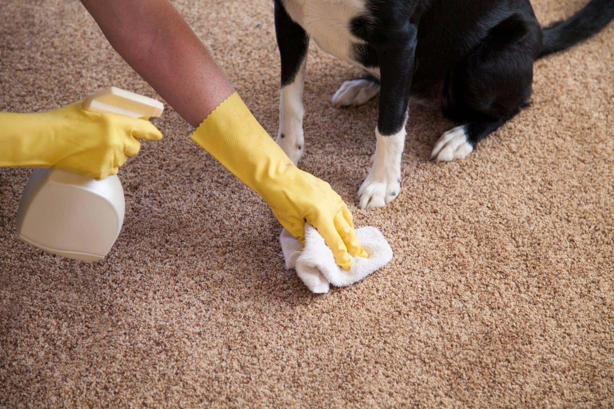 Как избавиться от запаха мочи собаки ? чем удалить запах на ковре, средства - serviceyard-уют вашего дома в ваших руках.