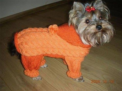 Вязание одежды для той-терьера и других собак мелких пород спицами и крючком: как связать комбинезон или свитер?