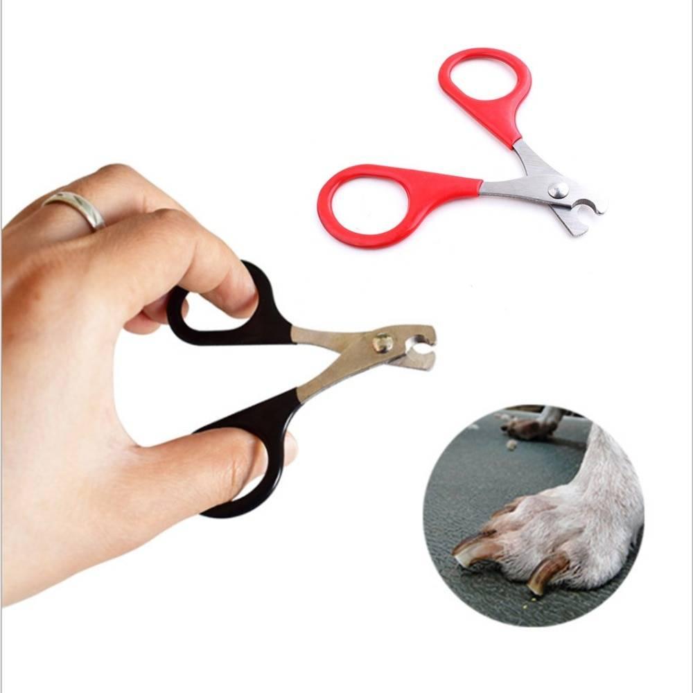 Как подстричь когти собаке правильно и без боли?