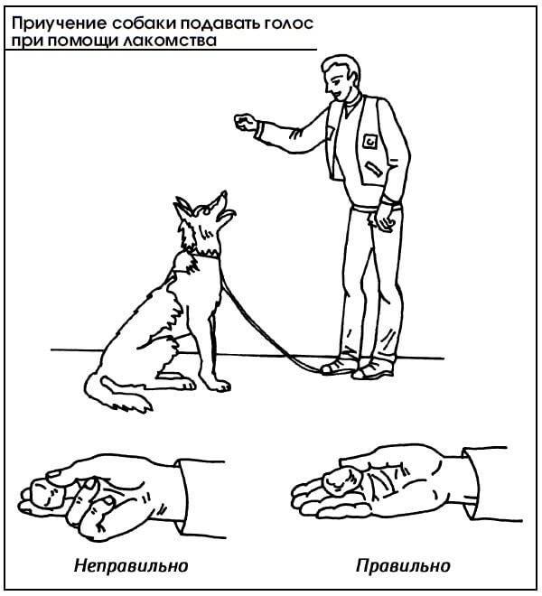Как научить собаку команде апорт: что значит команда апорт, процесс обучения, дрессировки - dogtricks.ru