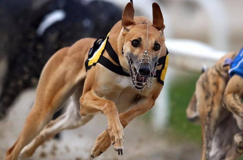 12 самых быстрых животных в мире