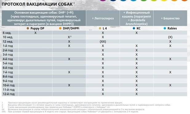 Прививки собакам по возрасту: таблица вакцинации, цена и породы