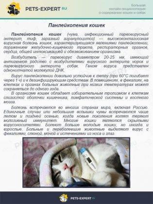 Атаксия у кошек: что это, лечение
