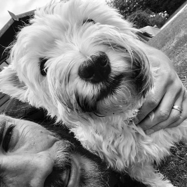 Благородные клички для собак
