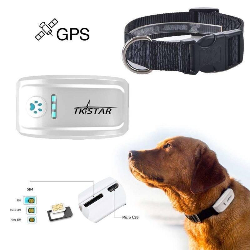 GPS-ошейник для собак с навигатором для охотничьих пород