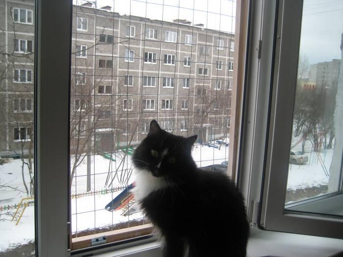 Приметы про кошек, старинные поверья