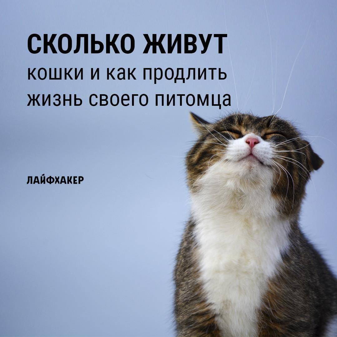 10 признаков того, что ваша котейка счастлива
