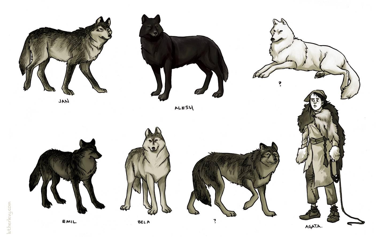 Дикие предки домашних собак: обзор пород, похожих на волков